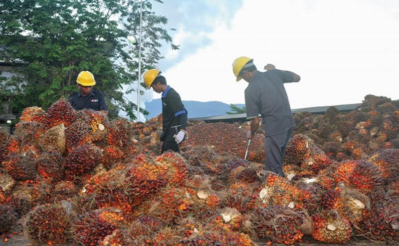 Nadia Hadad: Palm Oil Productivity Governance Still Not at Maximum